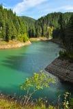 grön lake för bolboci Arkivfoton
