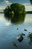 grön lake seattle Arkivbild