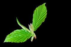 grön landning Royaltyfria Foton