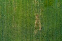 Grön landsäng i bästa sikt arkivbild