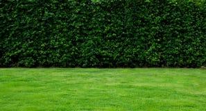Grön landskapbakgrund Royaltyfri Bild