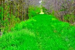 grön lane Royaltyfria Foton