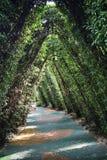 grön lane Royaltyfria Bilder