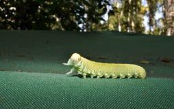 Grön larv på tältet royaltyfri foto