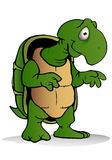 Grön lat sköldpadda Royaltyfri Fotografi