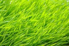 grön lawn arkivfoto