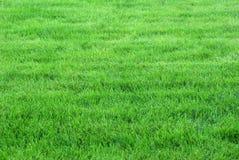 Grön lawn Arkivbilder