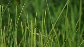grön lawn lager videofilmer