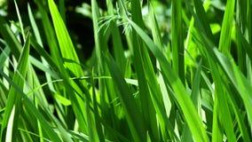 grön lawn arkivfilmer