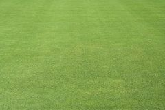 grön lawn royaltyfri bild