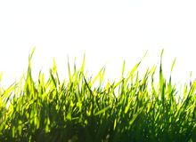 grön lawn fotografering för bildbyråer