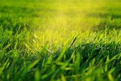 grön lawn royaltyfria bilder