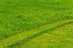 grön lawn arkivfoton