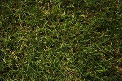 grön lawn Bakgrund Naturtexturer royaltyfri fotografi