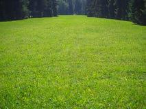 grön lawn Den sceniska sikten av ett härligt engelska utformar trädgården med en stor öppen gräsmatta för grönt gräs arkivbilder