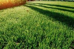 grön lawn för gräs royaltyfria bilder