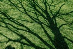 grön lawn för gräs royaltyfri foto
