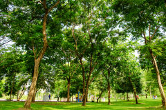 Grön lawn i stad parkerar Fotografering för Bildbyråer