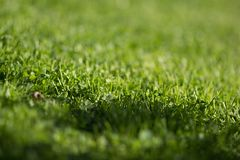 Grön lawn mönstrar royaltyfri fotografi