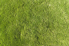 grön lawntextur arkivbilder