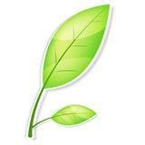 grön leaf royaltyfri illustrationer