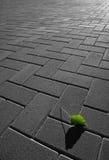 grön leaf 2 Arkivfoto