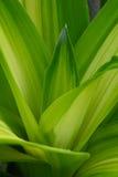 grön leaf Royaltyfri Fotografi