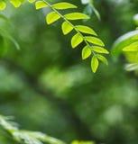 grön leaf Arkivbilder
