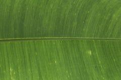 grön leaf Arkivfoto