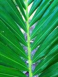 grön leaf Royaltyfria Foton