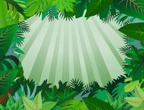 grön leaf för bakgrund Royaltyfri Bild