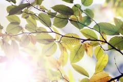 grön leaf för bakgrund Royaltyfri Foto
