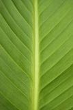 grön leaf för bakgrund Arkivfoto