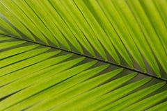 grön leaf för bakgrund arkivbilder