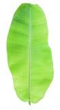 grön leaf för banan Arkivfoton