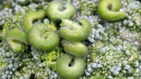 grön leaf för caterpillar arkivfilmer