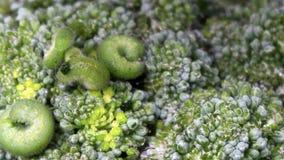 grön leaf för caterpillar stock video