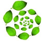 grön leaf för cirkel Royaltyfria Bilder