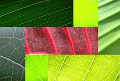 grön leaf för collage Royaltyfri Foto