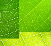 grön leaf för collage Royaltyfri Bild
