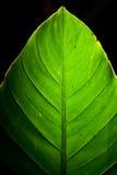 grön leaf för detalj Arkivbilder