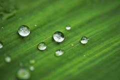 grön leaf för droppar Royaltyfria Bilder