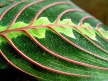 grön leaf för färg arkivfoto