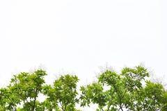 grön leaf för filial royaltyfri fotografi