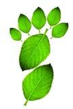 grön leaf för fotspår Royaltyfria Bilder