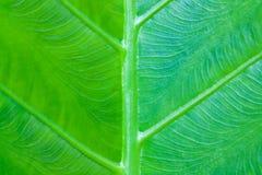 Grön leaf för gjord bakgrund Royaltyfri Foto