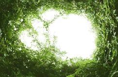 grön leaf för ram royaltyfria foton