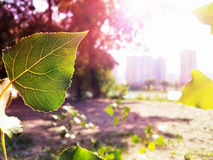 Leaf. Makro. royaltyfria foton