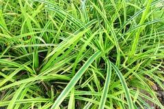 Grön leaf i trädgården royaltyfria bilder