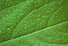 Grön leaf, makro Arkivfoto
